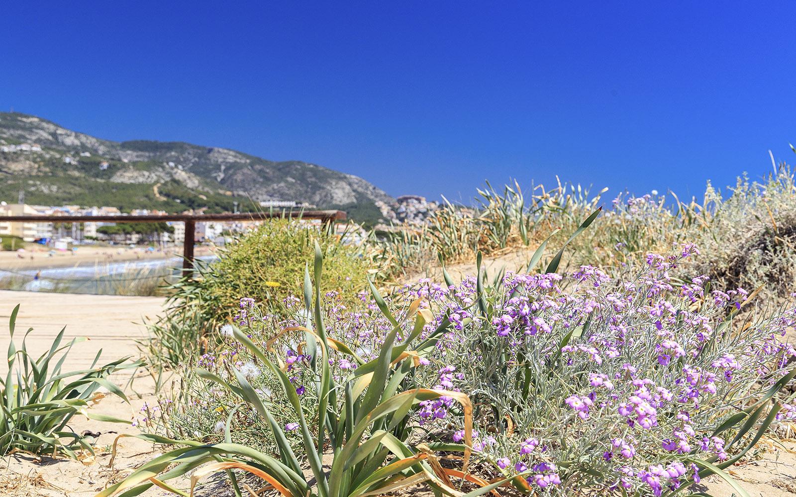 Turismo-Alcossebre-Playa-Carregador-Alcossebre-Zona-Dunar