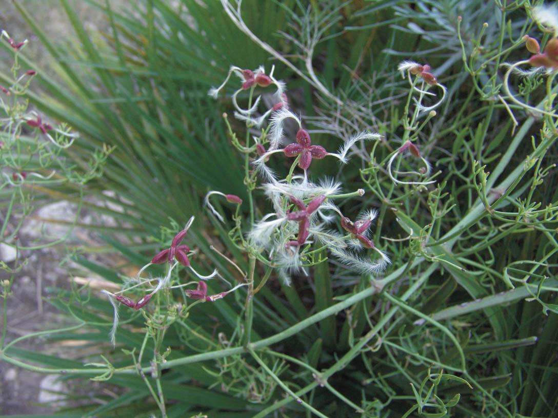742-sube cast flora