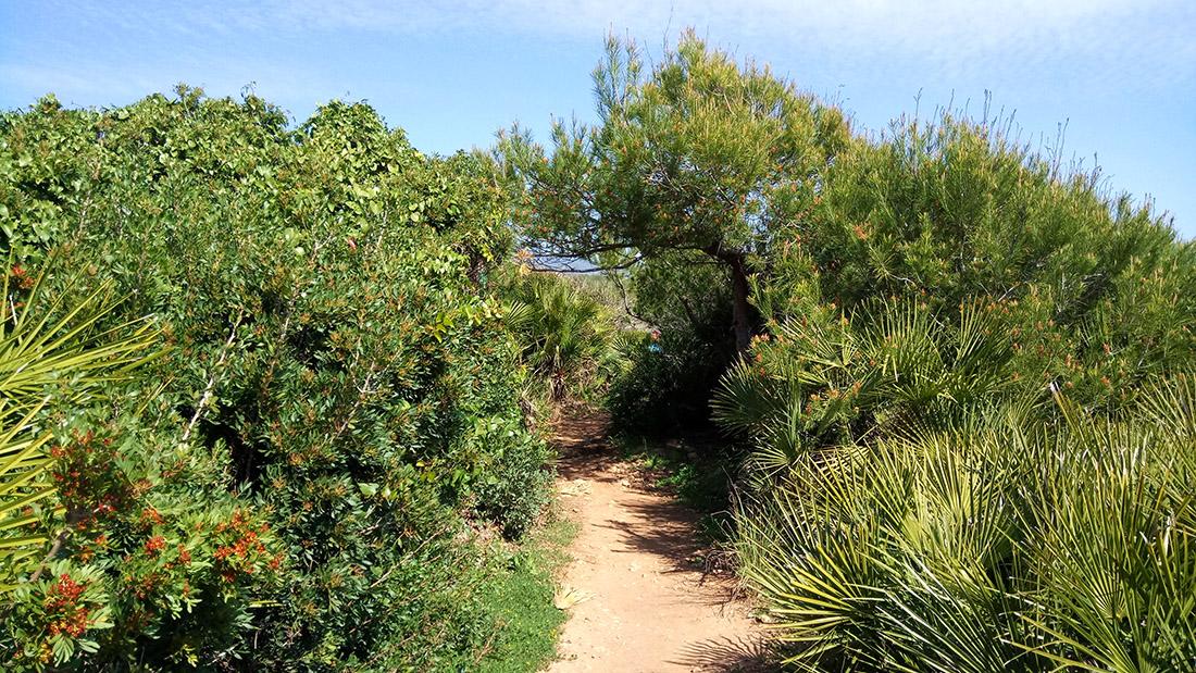 turismo-alcossebre_vegetacion-palmito-serra-de-irta