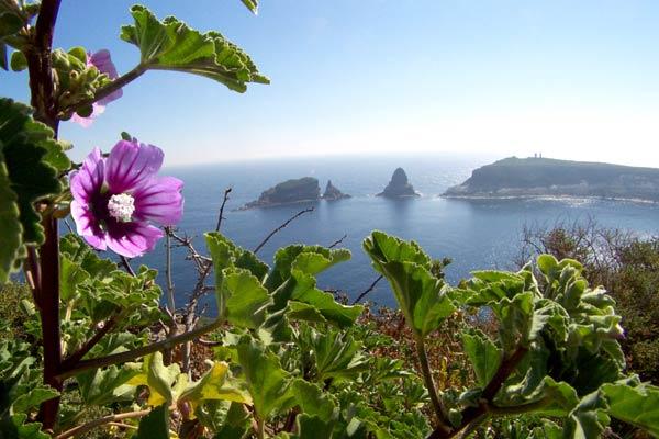 Turismo Alcossebre. Flora Islas Columbretes